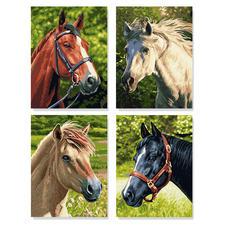 """Malen nach Zahlen Quattro """"Pferdeportrait"""" Malen nach Zahlen Quattro - 4 Bilder im Set."""