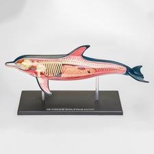 3D-Anatomie-Puzzle - Delfin 3D-Anatomie-Puzzles