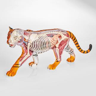 3D-Anatomie-Puzzle - Tiger 3D-Anatomie-Puzzles