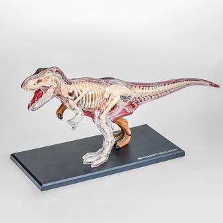 3D-Anatomie-Puzzle - T-Rex 3D-Anatomie-Puzzles